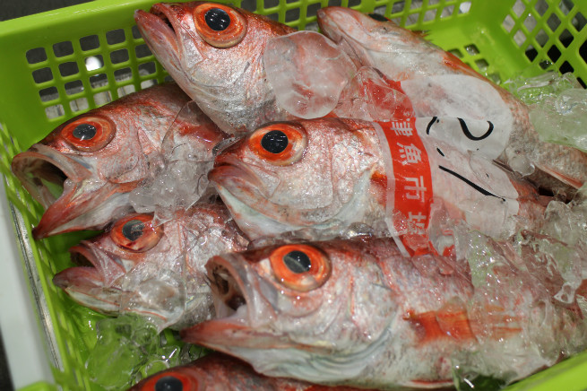 沼津港に水揚げされた鮮魚